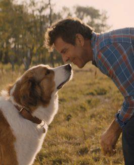 Bailey – Ein Hund kehrt zurück