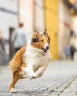 Lassie – Eine abenteuerliche Reise